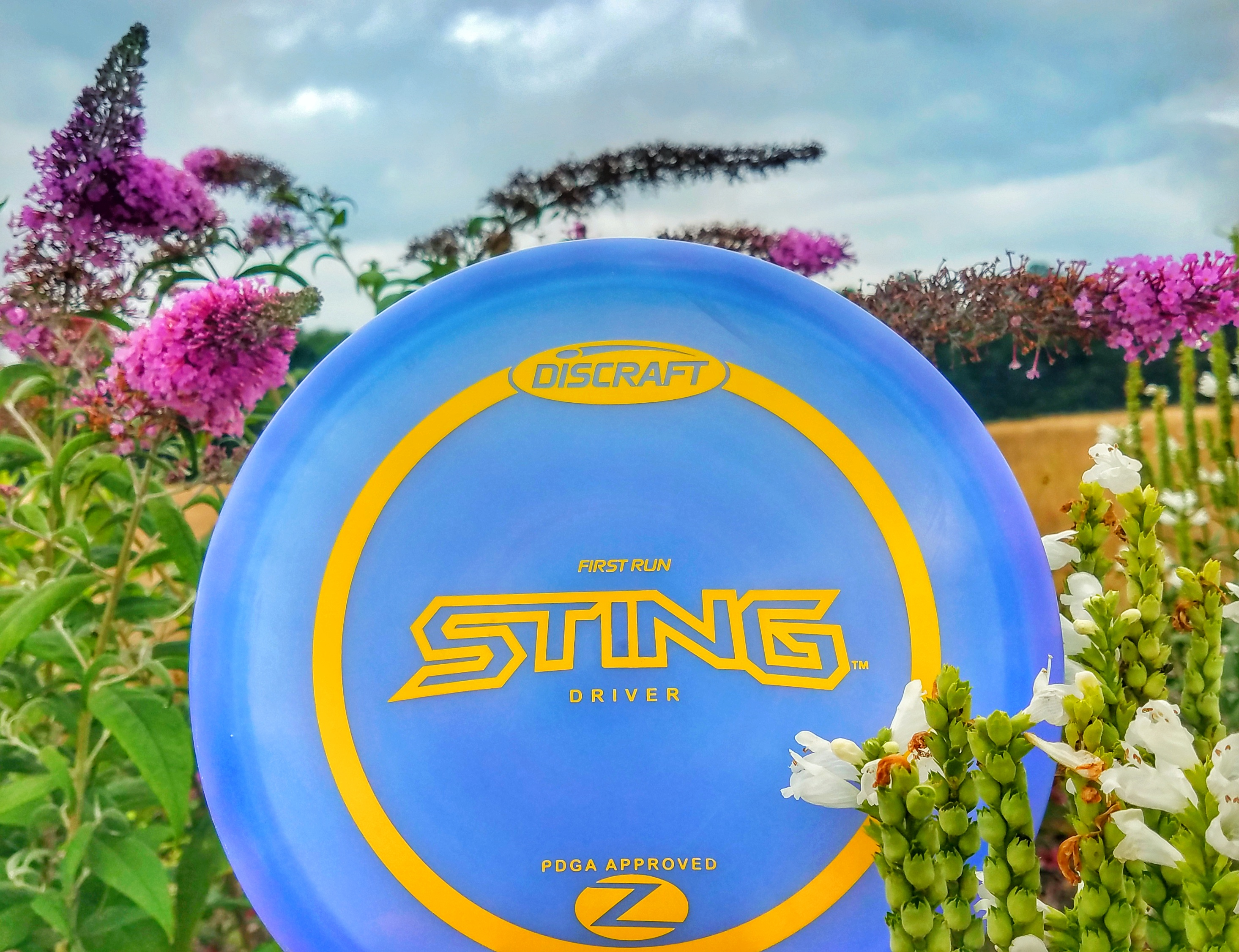 Discraft Sting Review disc golf